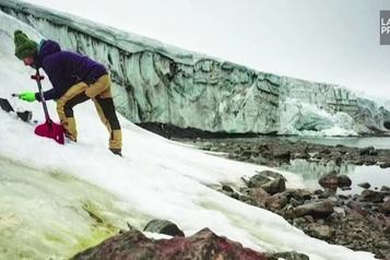 Quand la neige verdit en Antarctique)