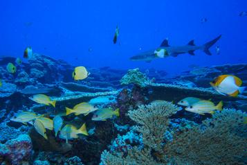 L'actualité scientifique à petites doses: Hawaii, sanglier et squelettes