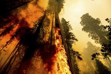 Quatreséquoias géants échappent aux flammes)