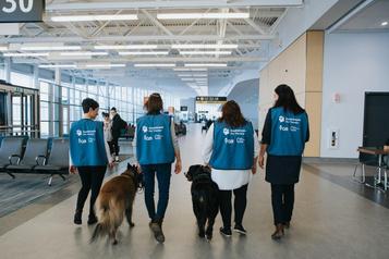Zoothérapie à l'aéroport deQuébec