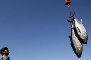 Le WWF dénonce la certification durable d'une pêcherie de thon rouge