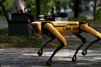 Le robot Spot devient chien de berger)