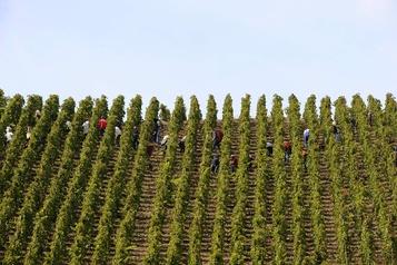 Les vignerons du Rhône plus inquiets du climat que de la COVID)