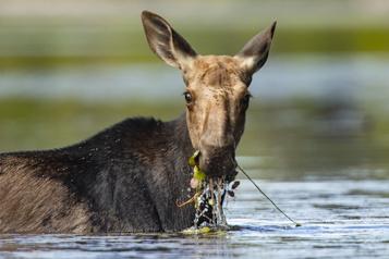 Photoreportage Conseils et bonnes pratiques pour observer la faune