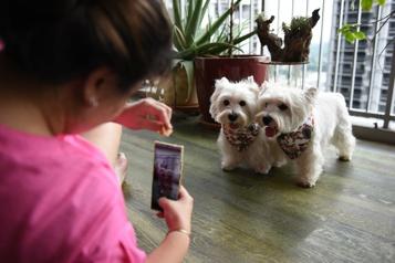 Des animaux influenceurs ont la cote à Singapour)