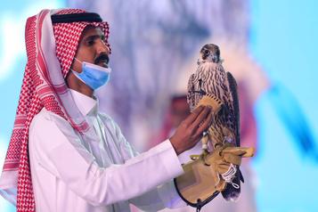 Un faucon vendu 223 000 $ en Arabie Saoudite)