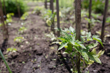 Plus d'agriculture urbaine dans Rosemont–La Petite-Patrie)