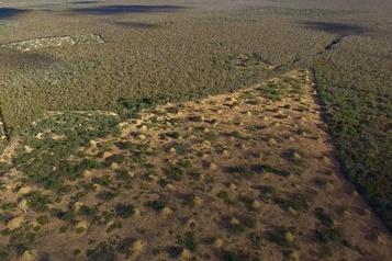 Réunion de l'ONU sur le climat au Brésil en pleine polémique sur l'Amazonie