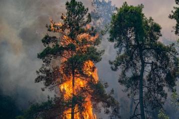Incendies en Turquie Une centrale thermique menacée, 300personnes évacuées)