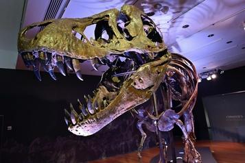 Jusqu'à 10,5millions pour un T-Rex aux enchères )