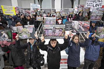 Occupation d'une porcherie: les activistes véganes plaident non coupable