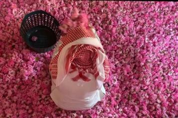 En Arabie saoudite, une ville fleurie de roses au milieu du désert)