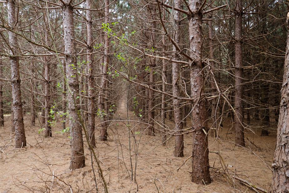 La plantation forestière jumelle les érablières. La diversité des arbres et des aménagements extérieurs rend cette terre particulièrement agréable.