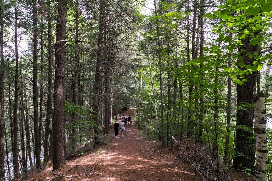 La terre de Fragments comprend aussi une superbe forêt.