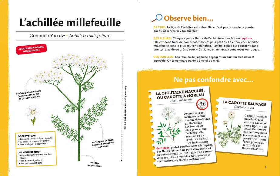 Extrait des Plantes d'ici, texte de Karine Morneau, illustrations de Valérie Desrochers