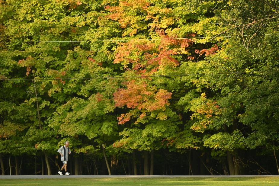 Un coureur matinal emprunte un sentier sous les couleurs automnales des arbres.