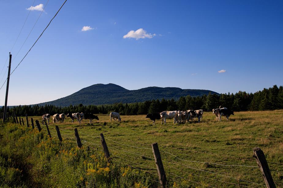 Scène typique de la région sur la route 257 entre le mont Ham et Weedon