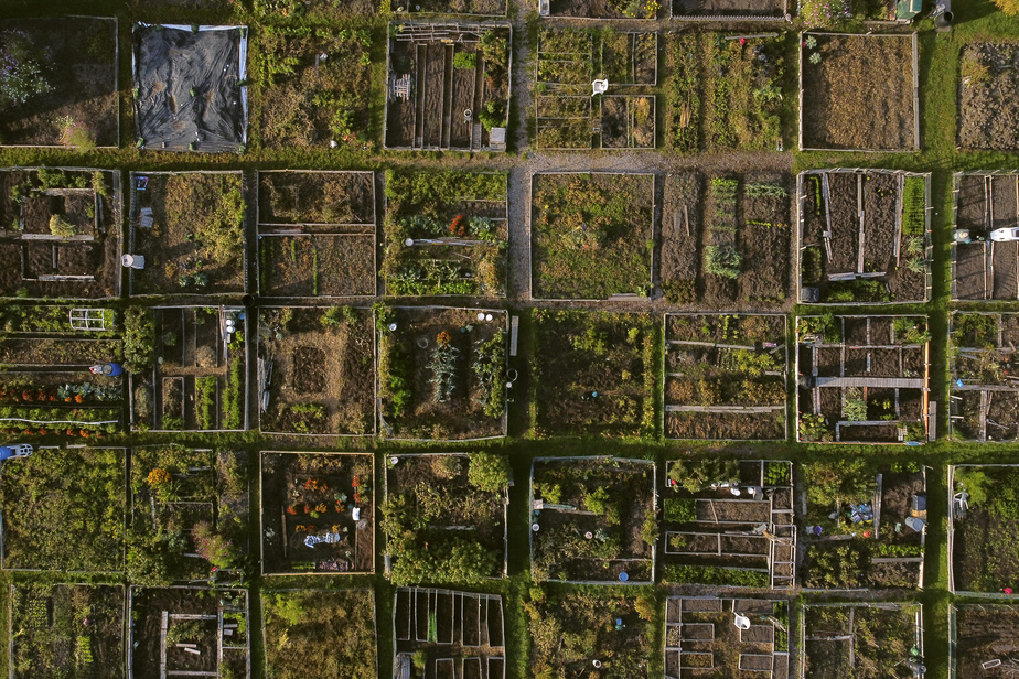 Vue aérienne des jardins communautaires