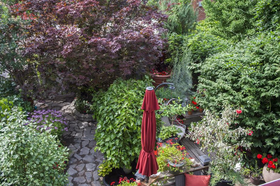 Difficile de se figurer les formes de ce double jardin de Rosemont, tant les plantations y sont luxuriantes. Une chose est sûre, les locataires bénéficient d'un véritable océan de verdure à leurs pieds. On en voit ici une partie depuis le balcon de MmeMarinier, locataire à l'étage.