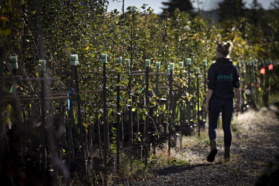 Dara Larfeuil-Peressini, chargée de projet chez SOVERDI et ingénieure forestière, se promène dans la plantation.
