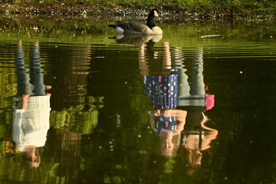 Des gens observent une bernache qui navigue sur l'eau.