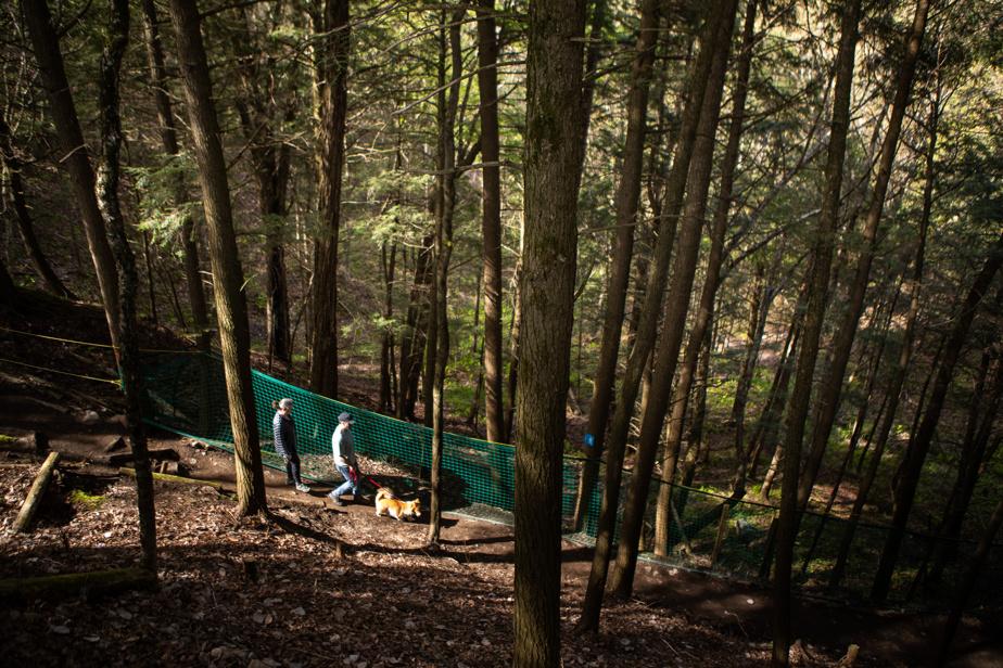 Les sentiers de randonnée serpentent dans des forêts dominées surtout par des feuillus.