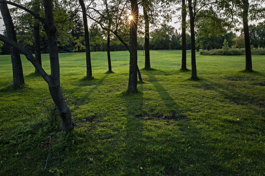 Lorsque les premiers rayons du soleil apparaissent à l'aube, un jeu d'ombre et de lumière se crée entre les arbres.