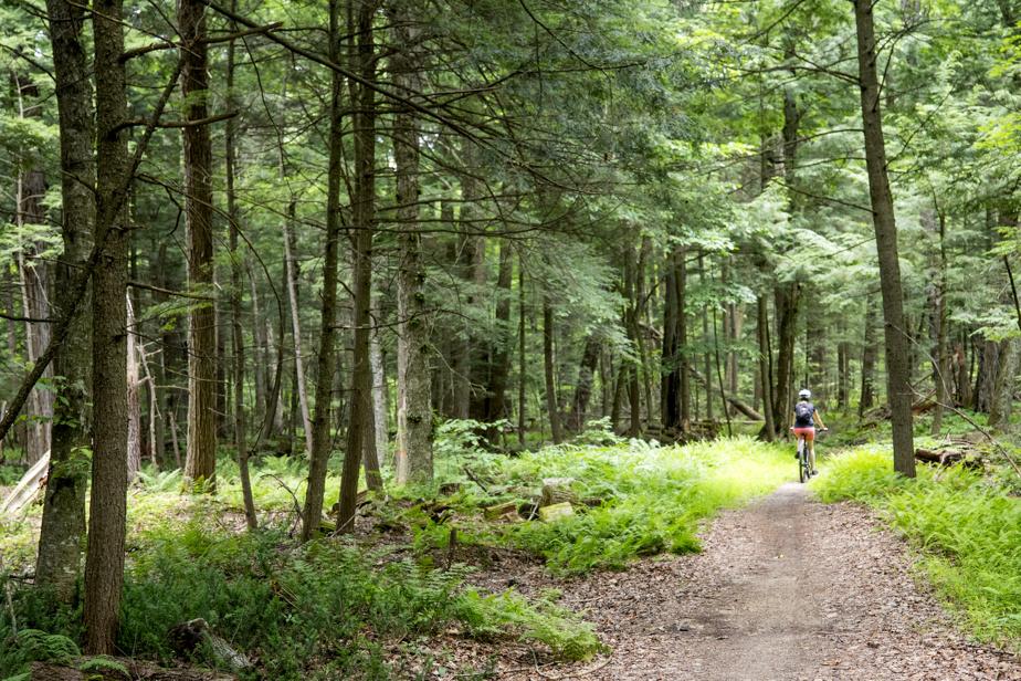Les cyclistes peuvent se ressourcer dans la forêt, habitée d'immenses pins centenaires.