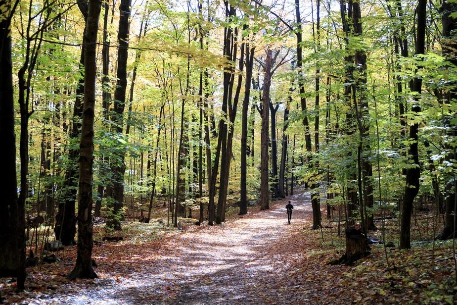Une joggeuse profite de cette superbe journée d'automne pour faire le plein d'oxygène dans la forêt.