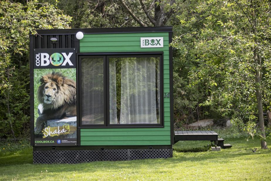 Une douzaine de Coolbox colorées permettent aux visiteurs de dormir sur le site du Parc Safari.