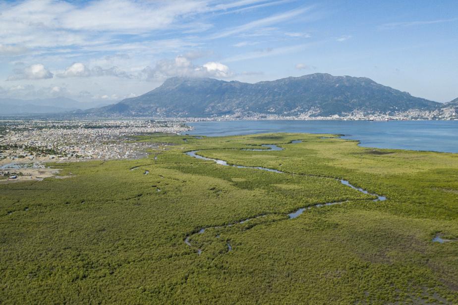 Vue aérienne de la mangrove à Defroille, en périphérie de Cap-Haïtien. L'expansion de la ville, dont la population a plus que doublé depuis 20ans, se fait en grande partie sur la barrière naturelle la protégeant de la mer qu'est la mangrove.