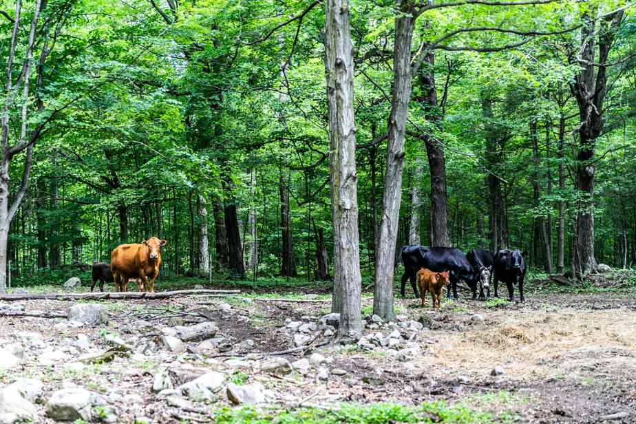 La forêt est constituée de milliers d'arbres à maturité. Certains sous-bois ont été dégagés tandis que d'autres sont restés à l'état sauvage. Après la commission qui porte son nom, M.Gomery avait planté 1200arbres afin de compenser la perte d'arbres occasionnée par le papier utilisé.