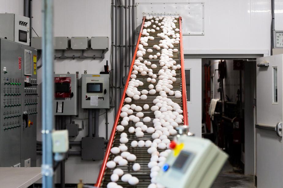 Le Groupe Inovo chapeaute la production annuelle de plus de 100millions d'œufs.