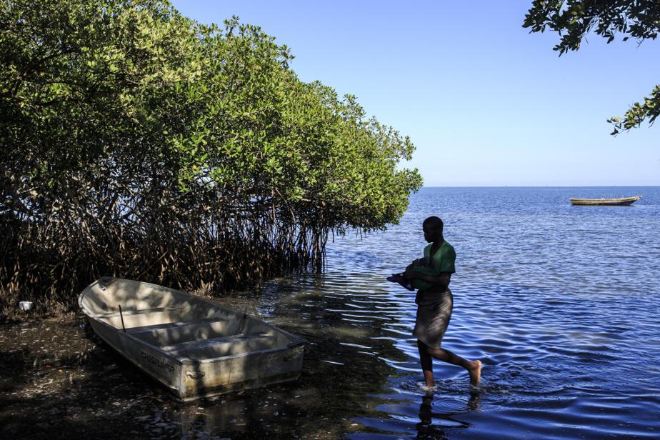 Un pêcheur revient sur la terre ferme en passant par la mince bande de mangrove toujours existante qui borde la localité de Caracol.