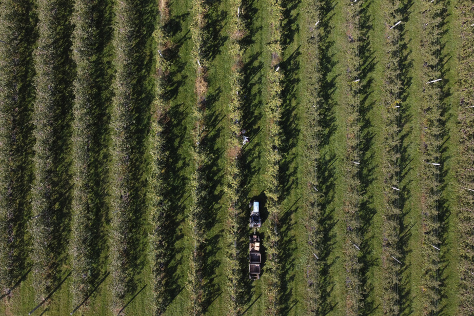 La Rosinette et la Passionata, deux nouvelles variétés de pommes entièrement développées au Québec, se retrouvent dans une dizaine de vergers québécois, dont le Verger de la Montagne.