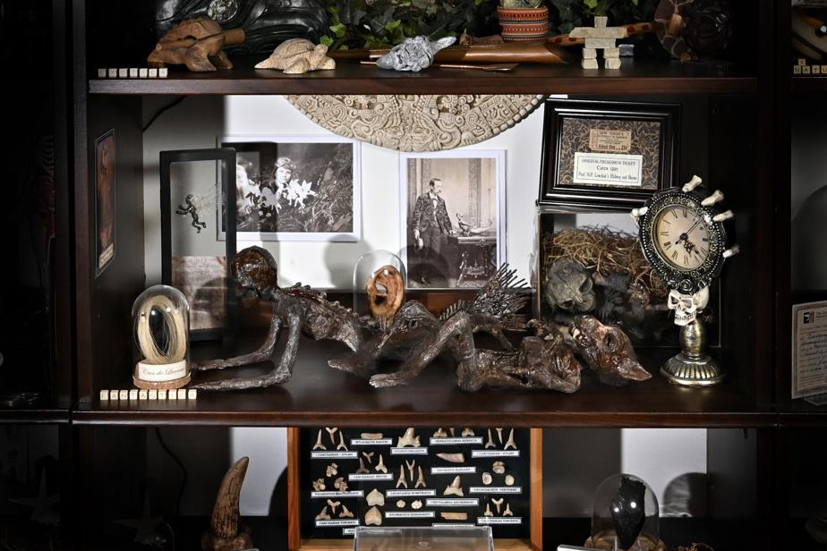 M.Feuilloley est un passionné… qui aime bien rigoler. Il a créé une section Fantastica avec de «faux» objets qui relèvent des mythes et légendes: du crin de licorne (à gauche), l'oreille de Van Gogh («c'est une blague, bien sûr!», s'esclaffe le collectionneur) ou une sirène de Fidji, un amalgame de singe et de poisson, un classique des cabinets de curiosités d'antan. L'histoire de cette dernière est étonnante, remontant à une vieille et étrange coutume de pêcheurs japonais, avant d'être récupérée par les «foires de monstres».