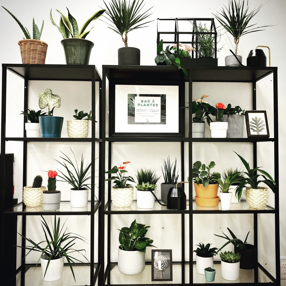 Un choix d'étagères (bois ou métal) est proposé comme présentoir.