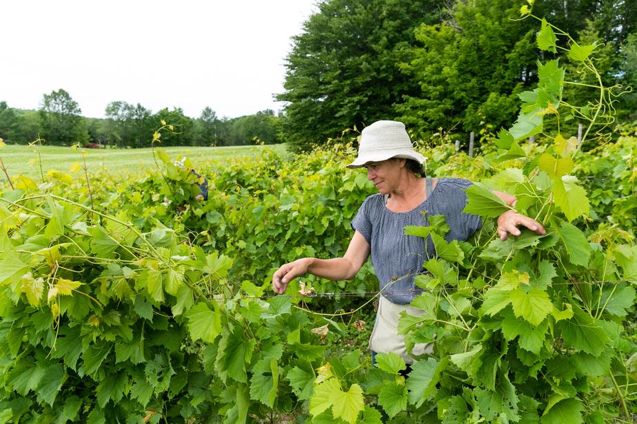 Elaine Ethier aime passer du temps dehors dans ses vignes.