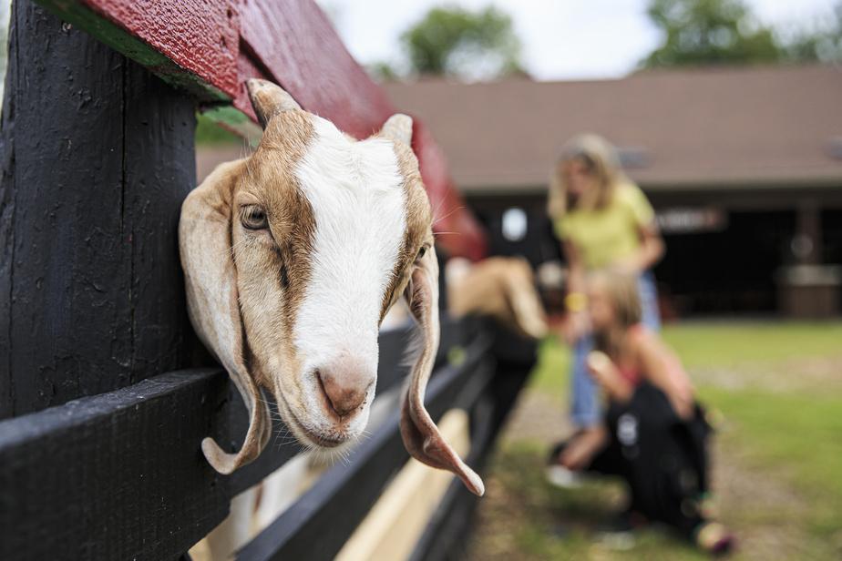 Sur place, les animaux de la fermette (cochons, poules, lapins, âne, etc.) séduiront les petits.