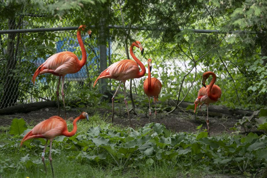 Séjour dans une Cool Box, les nouvelles mini maisons sur le site du parc Safari. Les flamants rose.