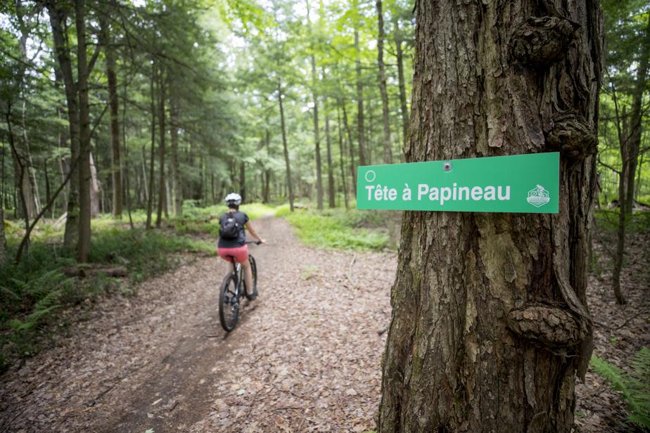 L'un des sentiers du nouveau centre Montebello Vélo de montagne, ouvert depuis le 24juin.
