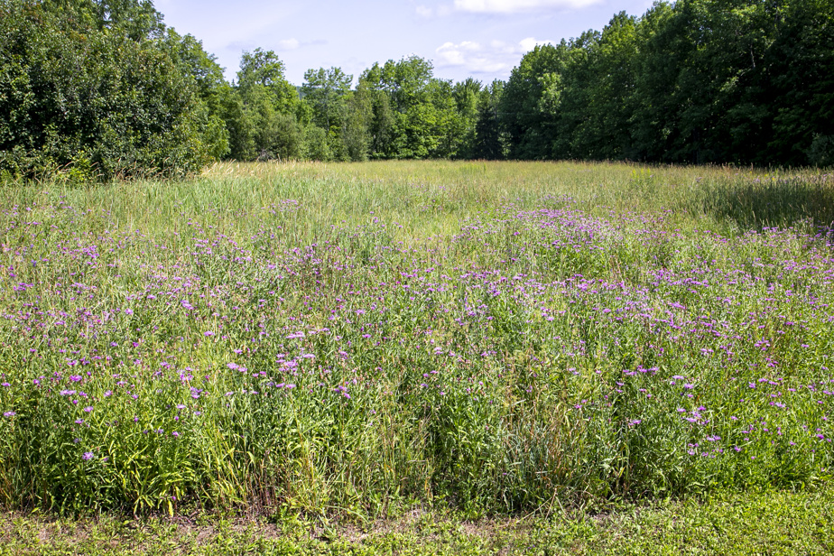 Cette partie du terrain sera transformée en champ de pivoines et de tournesols.