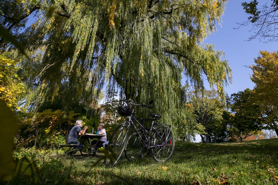 On retrouve plusieurs endroits isolés à l'intérieur du circuit Gilles-Villeneuve pour faire un petit pique-nique en paix. Ce couple prend une pause de sa randonnée de vélo pour manger sous ce saule pleureur.