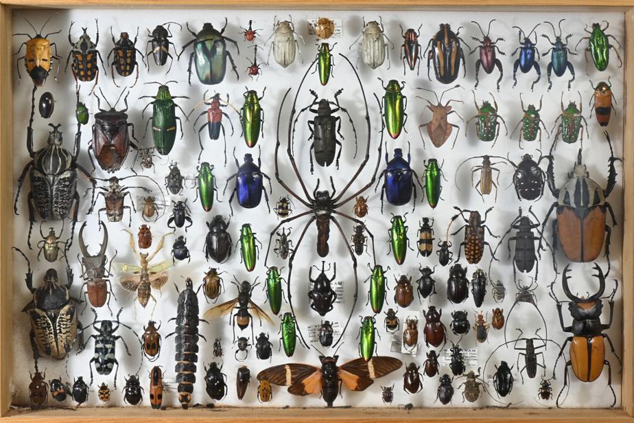 Araignée, scarabées, papillons, alouette. Les insectes effraient certains observateurs, mais il faut avouer qu'ils sont dotés de formes et couleurs incroyables.