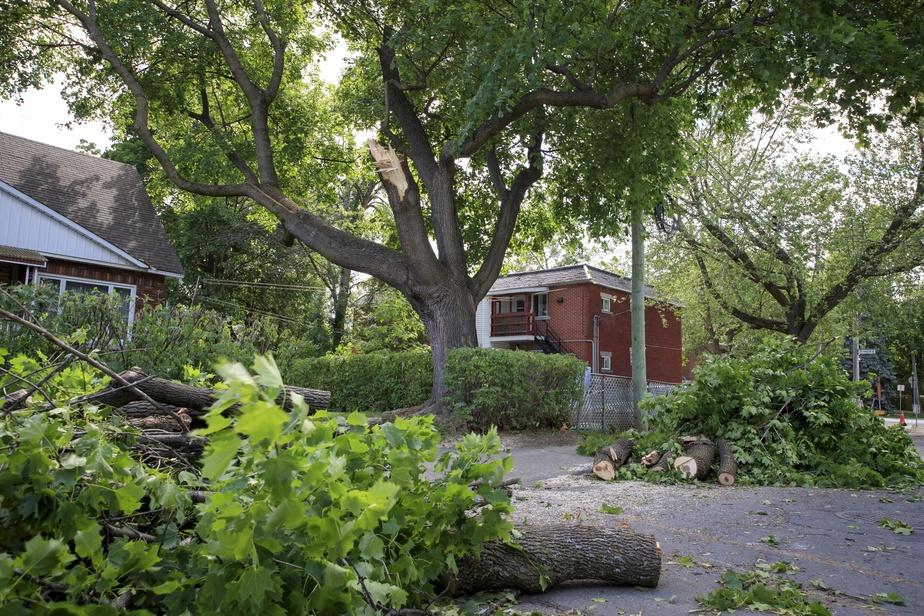 PRESSE Les vents du sud-ouest de 40 km  h avec rafales à 70 km  h sont susceptibles d'endommager arbres et végétaux