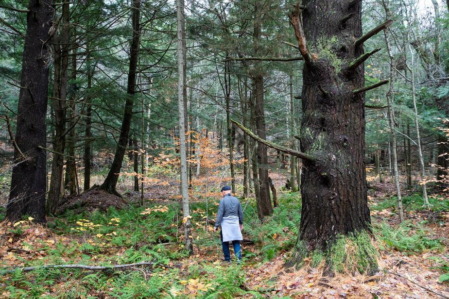 Un immense pin blanc de près de 3,5m de circonférence règne en maître dans le parc écologique Jean-Paul-Forand. Situé sur le versant est du mont Shefford, le parc propose des sentiers de randonnée qui traversent plusieurs milieux naturels.