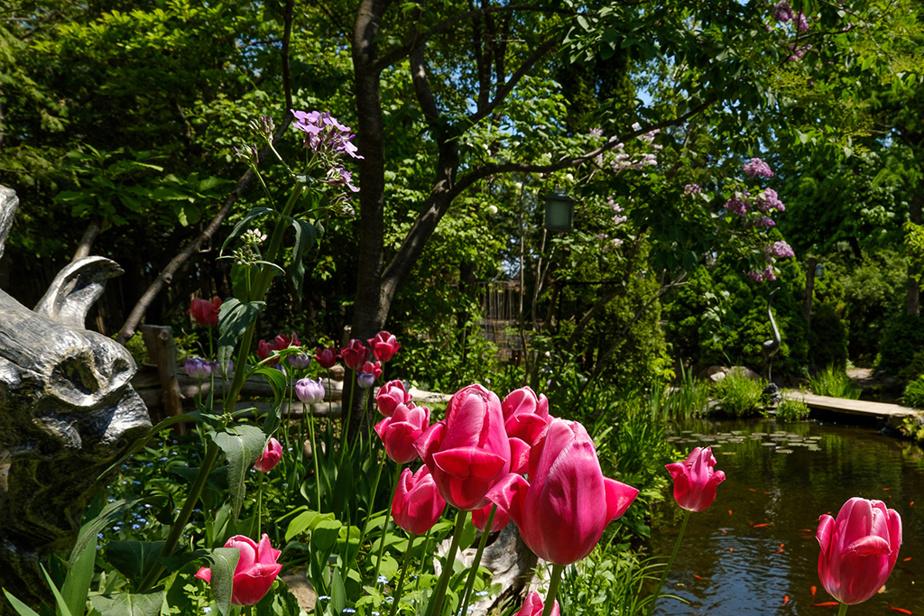 Jean Bazinet a créé de toutes pièces un magnifique jardin, à Laval, au cours des 32dernières années.