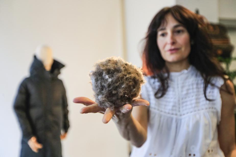 Le duvet d'eider est un produit noble, sauvage et incroyablement isolant, récolté à la main sur certaines îles du fleuve Saint-Laurent.