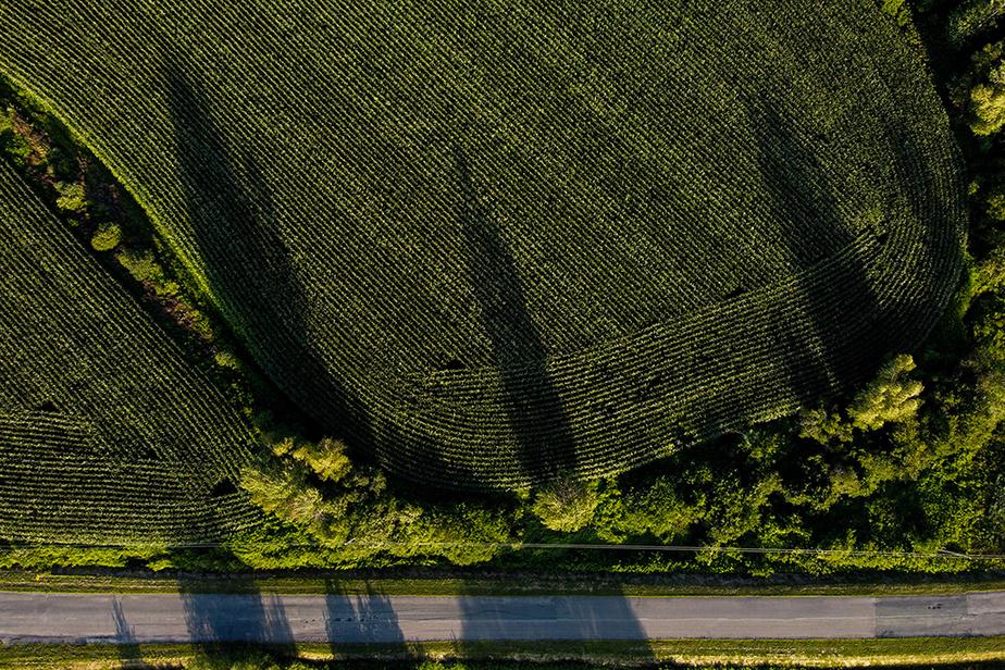 Vue aérienne d'un champ en fin de journée à Saint-Félix-de-Kingsey, près de Drummondville