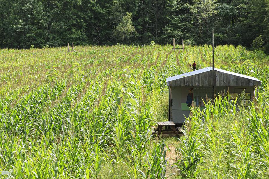 À travers un dédale de passages, de zigzags et de culs-de-sac, les labyrinthes de maïs du Verger Labonté deviennent des jeux d'évasion et d'énigmes format géant.